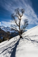 Avalanche Tree