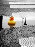 duckie lost in the city
